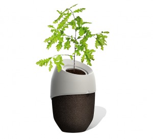Biodegradable ROOTS Urn